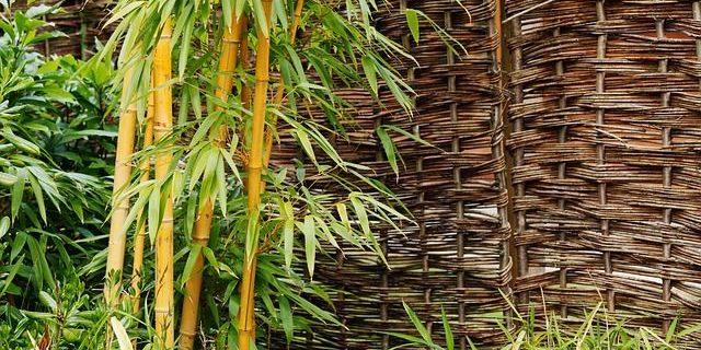 Mit Bambus zum perfekten japanischen Garten für zu Hause