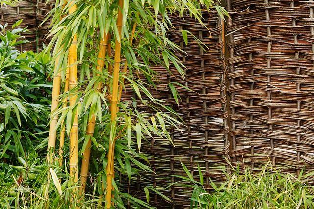 Bambus Garten Japanischer Stil