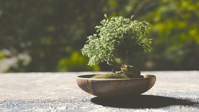 outdoor bonsai arten pflegetipps kaufberatung. Black Bedroom Furniture Sets. Home Design Ideas