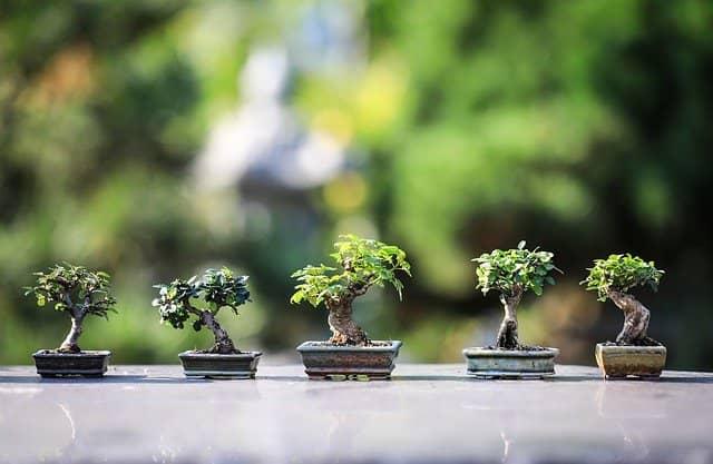 Outdoor Bonsai Tipps für die Pflege
