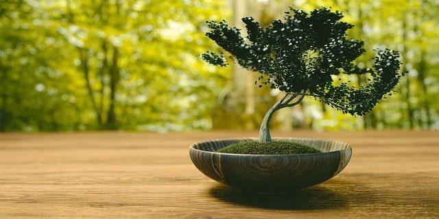 Bonsai Anfänger die besten bonsai für einsteiger: tipps zu pflege & standort
