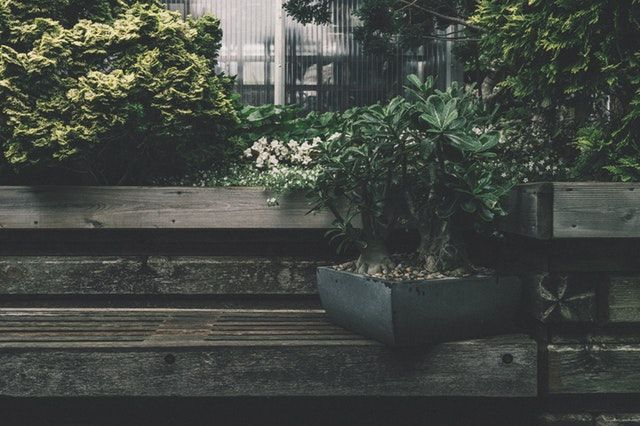 bonsai aus samen z chten bonsai b ume aufziehen pflegen. Black Bedroom Furniture Sets. Home Design Ideas