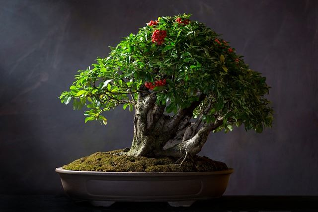 grüner Bonsai in dunkelbrauner Schale